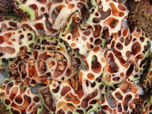 Sarang semut terbukti tumpas kanker & berbagai penyakit berat