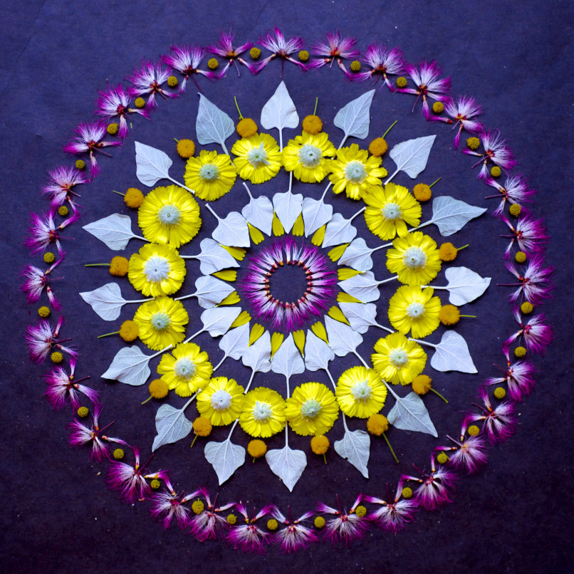 danmala569-sonoran-desert-wildflowers