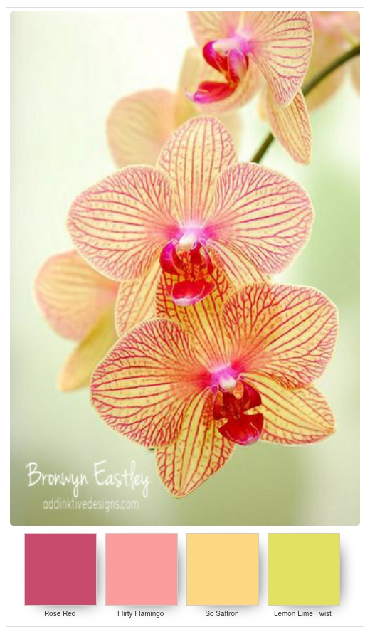 Stampin' Up! Colour Combos for Paper Orchids - Part A
