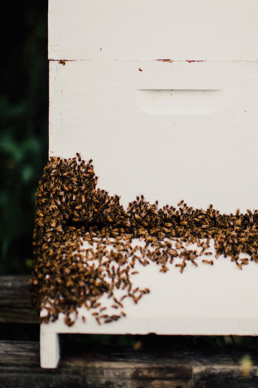 Natural-beehive-2
