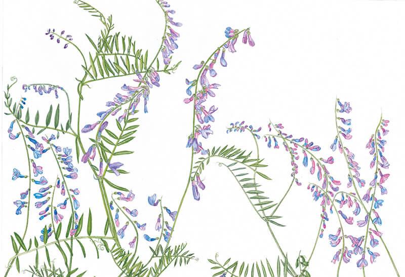 Imagini pentru the transylvania florilegium