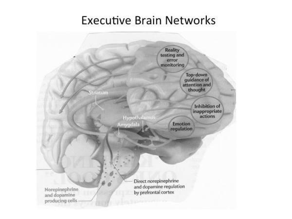 EF_Brain