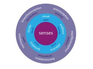 The-human-senses