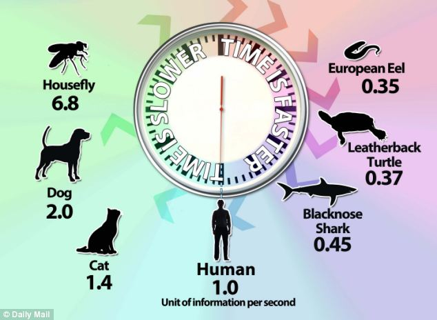Barkley TPR 2018 - Time Perception in species