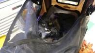 Flash in her stroller