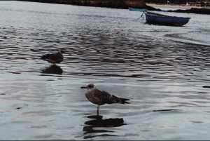 ANMUPESCA, Mujeres de la Pesca