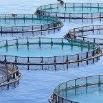 Biomar Aquaculture