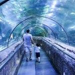 Sea World Aquarium
