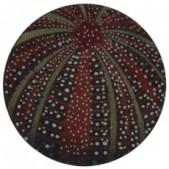 bridie-hall-urchin-