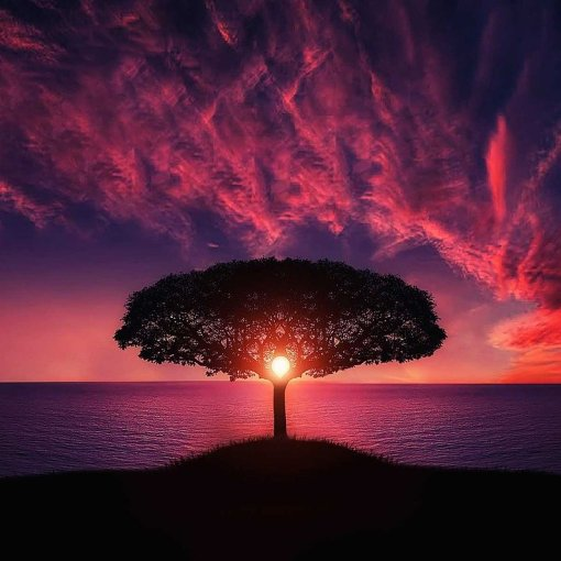 Imagen ilustrativa, donde aparece un árbol, a contra luz con un atardecer violeta de fondo