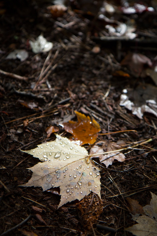 Fresh Autumn Rain, Abrams Falls Trail, Great Smoky Mountains National Park, TN