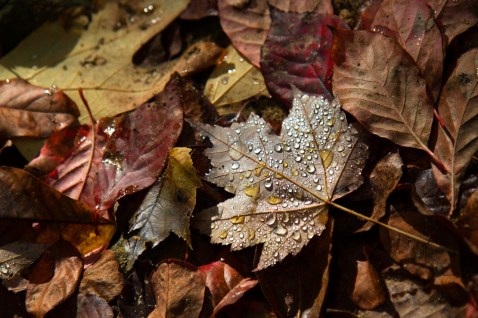 Fresh Autumn Rain, Abrams Falls Trail, Great Smoky Mountains National Park, TN