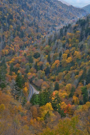 Fall, Follow the Road, Great Smoky Mountains National Park, TN