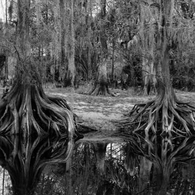 Cypress reflection, Fisheating Creek Outpost, Palmdale, FL