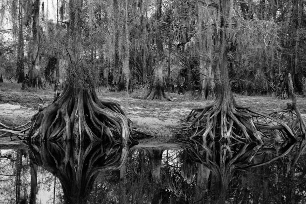 Cypress reflection, Fisheating Creek Outpost, Palmdale, FL