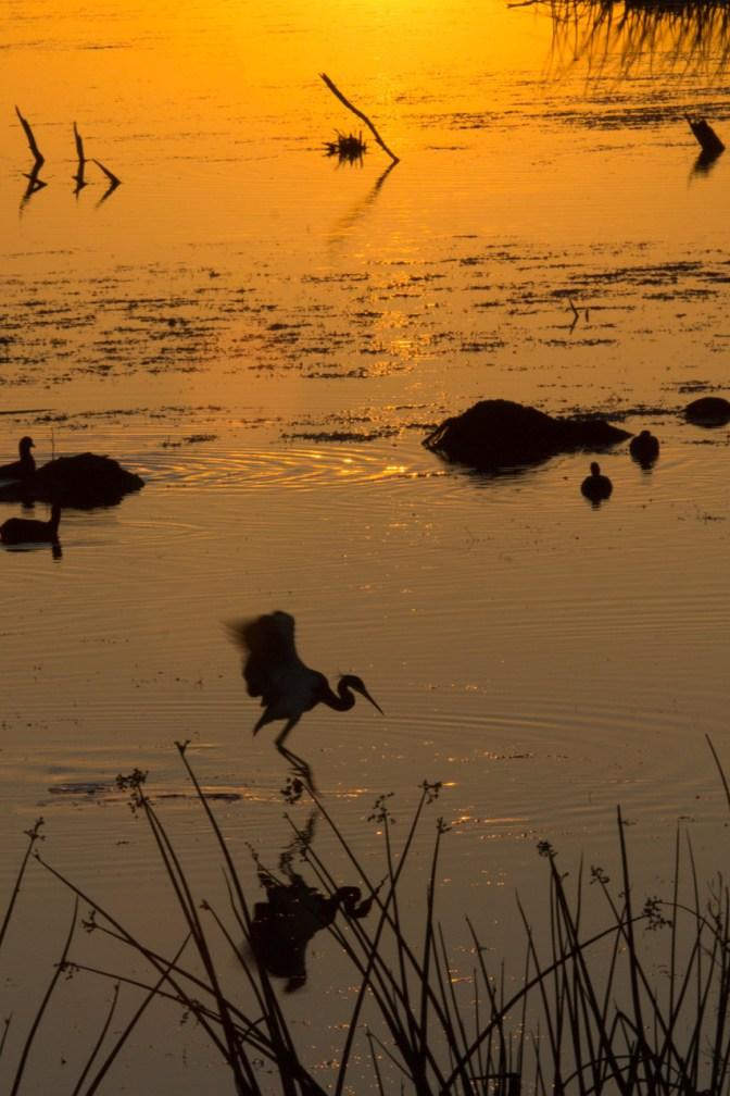 Sunset in Silhouette, Viera Wetlands, Viera, FL