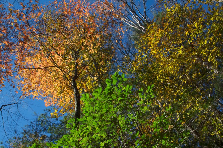 Fall Colors on the Trail, Upper Desoto Falls, Lumpkin County, GA © Adel Alamo 2014