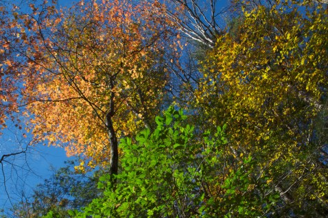 Fall Colors on the Trail, Upper Desoto Falls, Lumpkin County, GA © Adel Alamo 2014