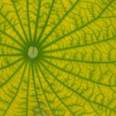 Leaf, McKee Botanical Gardens, Vero Beach, FL