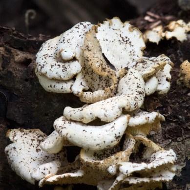 Face in the Fungi II, Teague Hammock Preserve, Port St. Lucie, FL