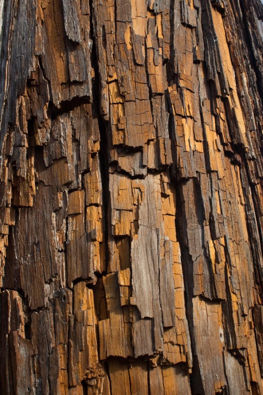 Pine Bark, Jonathan Dickinson State Park, Hobe Sound, FL