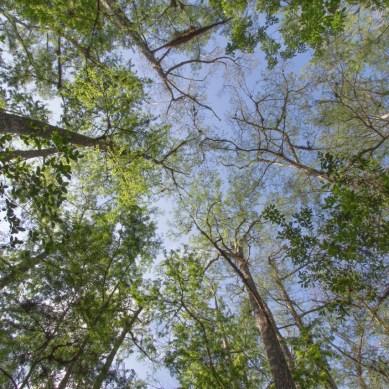 Trail, Corkscrew Swamp Sanctuary, Naples, FL