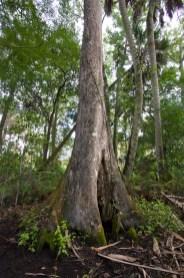 Cypress Base, Riverbend Park, Jupiter, FL