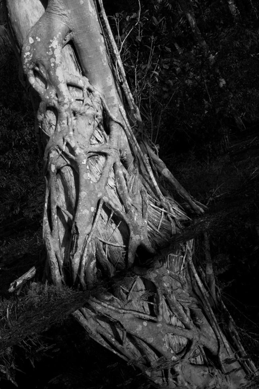 Cypress, Riverbend Reflection, Riverbend Park, Jupiter, FL