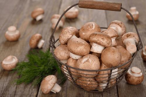Mushroom Apps.png