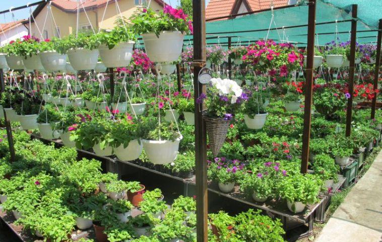 Flori de vara aranjate in sera Tria's