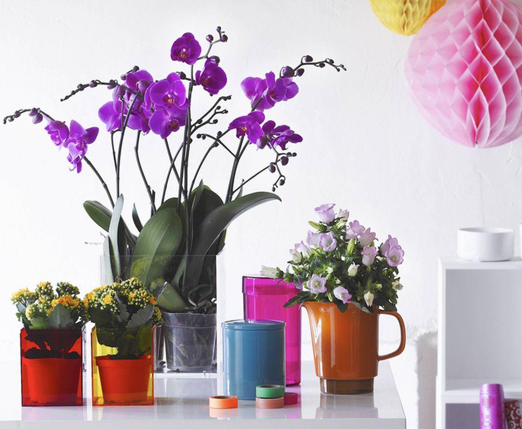 5 sfaturi pentru ingrijirea plantei Phalaenopsis, cea mai vanduta orhidee din Romania