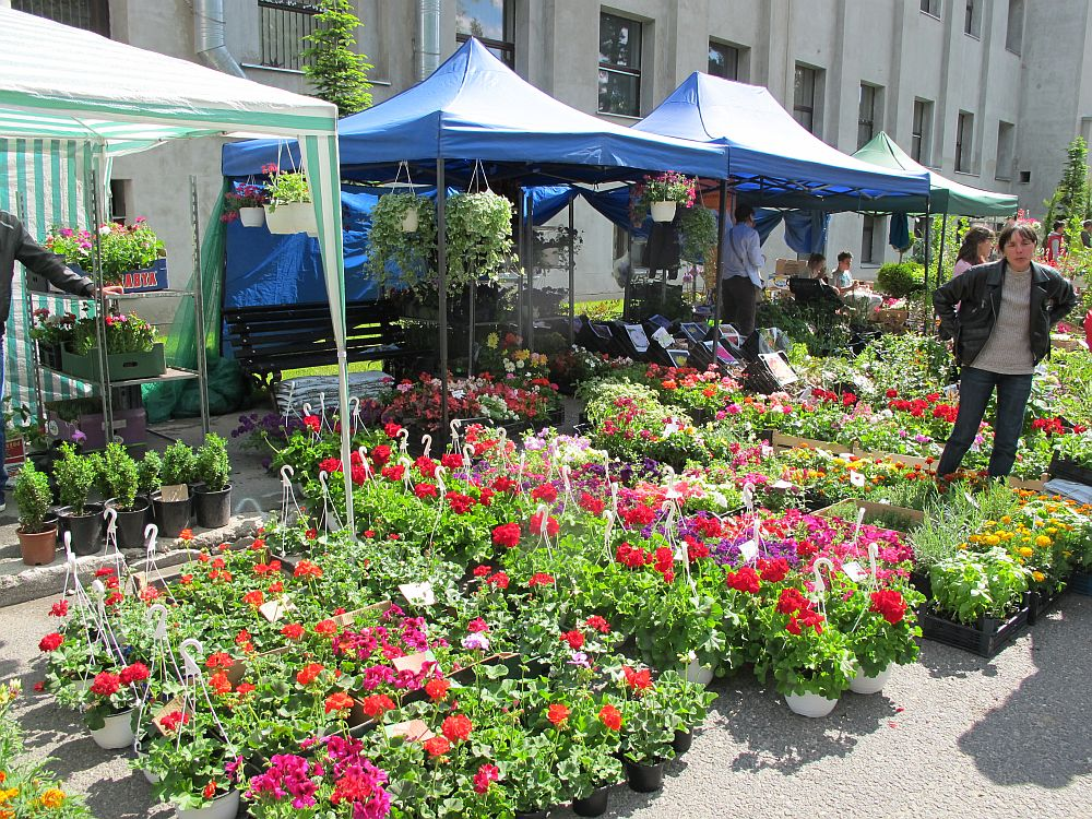 adelaparvu.com despre targul Hortus Florshow 2014, targul de flori de la Agronomie (18)