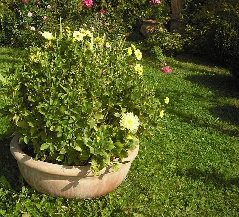 adelaparvu.com despre vase, ghivece, statuete, jardiniere din teracota, design Terecote, Sighisoara (1)