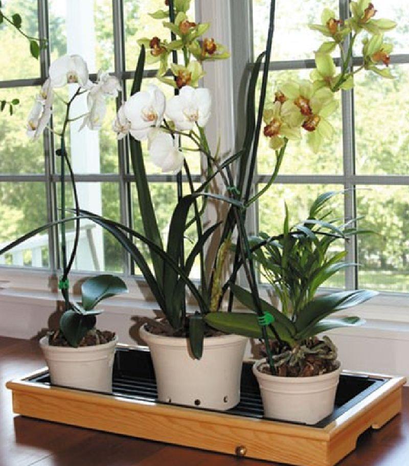 adelaparvu.com despre cum uzi plantele cand pleci in vacanta, Text Carli Marian (7)