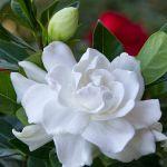adelaparvu.com despre caderea bobocilor la Gardenia, Text Carli Marian, Foto Gardenphotos (2)