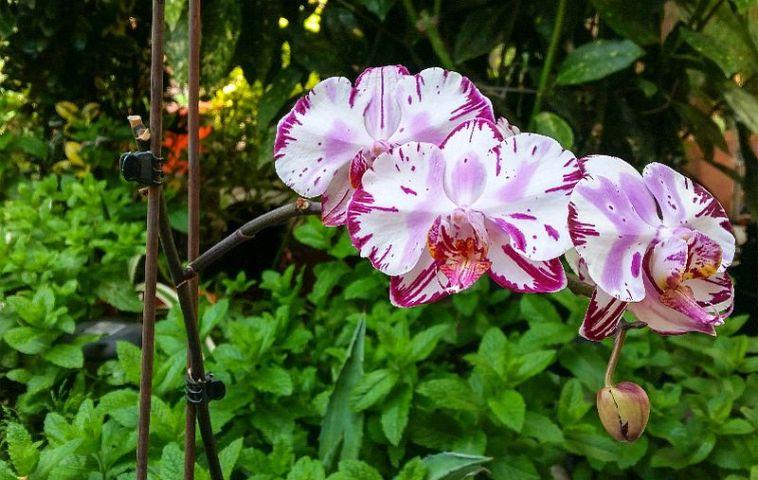 adelaparvu.com despre fertilizant orhidee, Pokon Powerspray pentru orhidee, text Carli Marian (1)