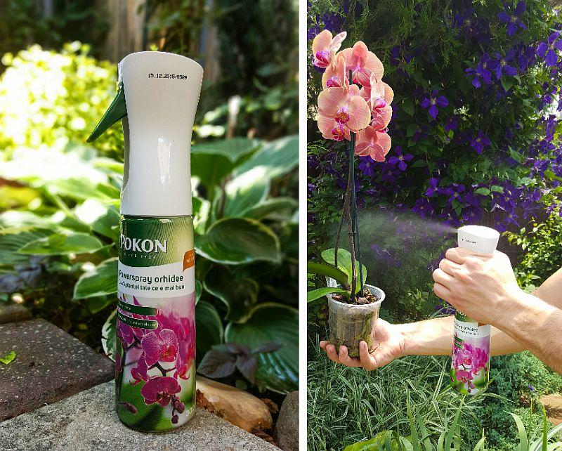 adelaparvu.com despre fertilizant orhidee, Pokon Powerspray pentru orhidee, text Carli Marian (8)