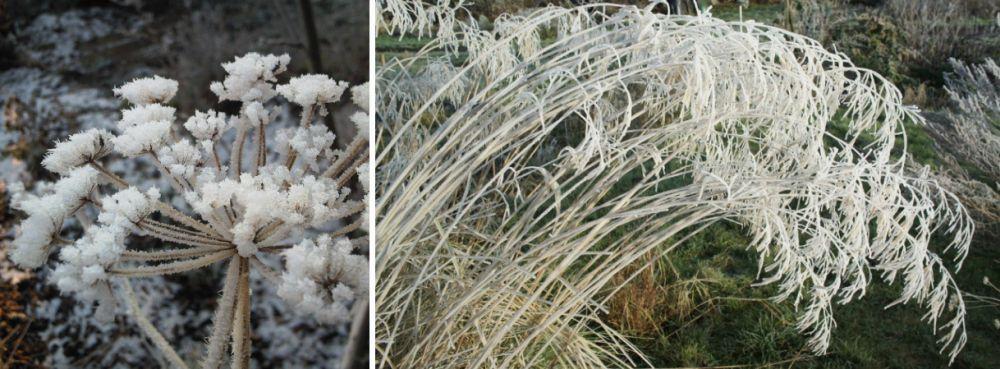 adelaparvu-com-despre-plante-care-fac-gradina-frumoasa-toamna-si-iarna-text-carli-marian-in-foto-allium-si-stipa