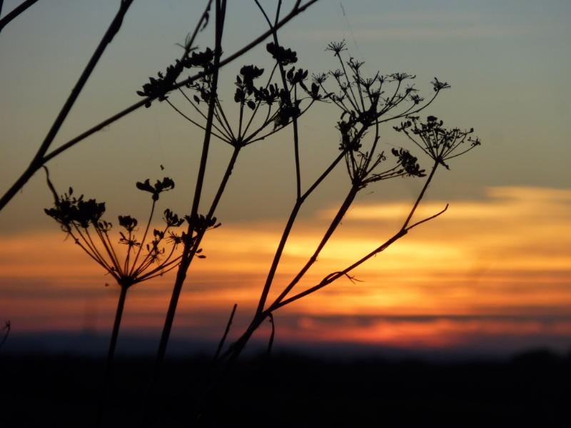 adelaparvu-com-despre-plante-care-fac-gradina-frumoasa-toamna-si-iarna-text-carli-marian-in-foto-fenicul-2