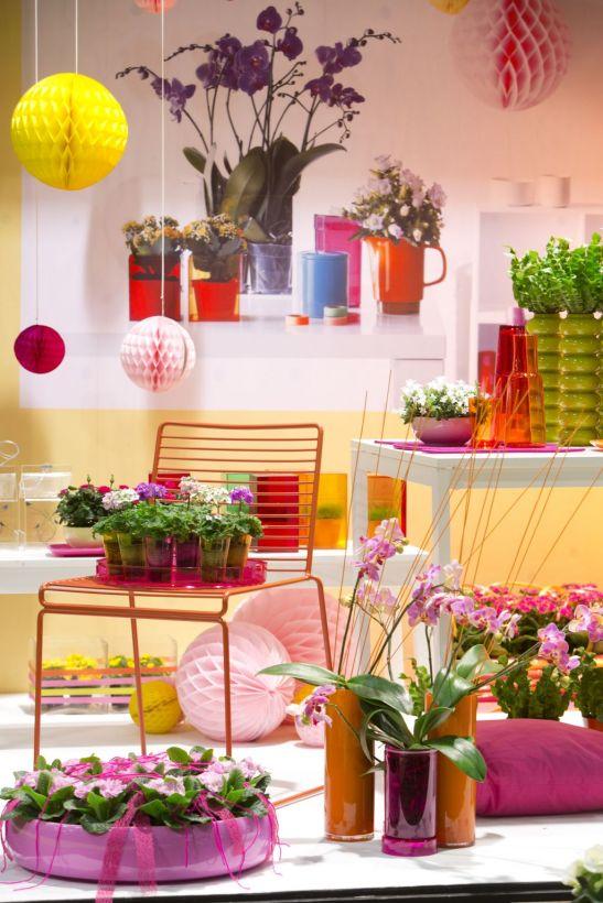 Florile pitice si colorate sunt in trendurile primaverii 2013