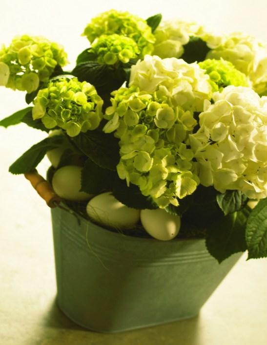 Cine a spus ca hortensiile nu pot decoa frumos o masa? uite aici idee cu Hydrangea macrophylla
