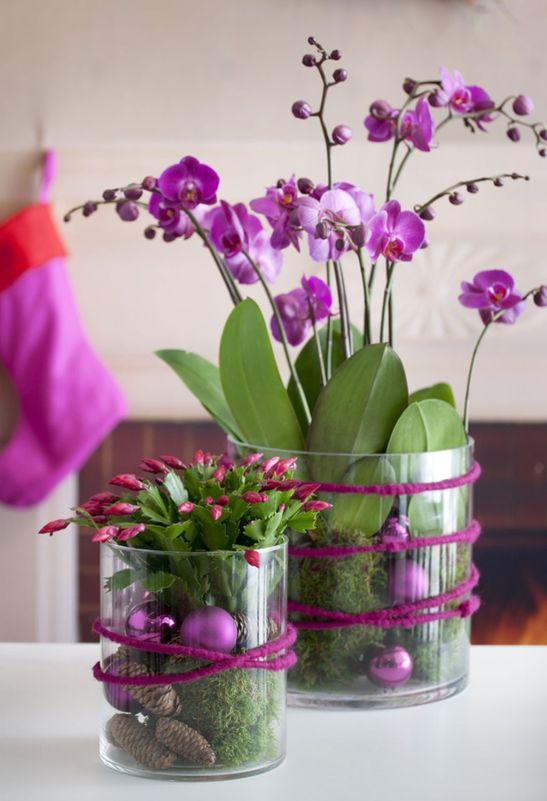 adelaparvu.com despre orhidea Phalenopsis Foto Floradania (2)