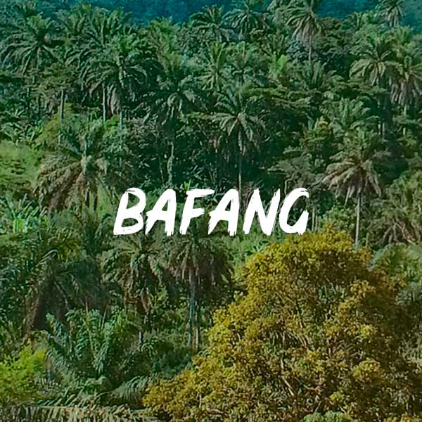 mounaye-jungle-bafang