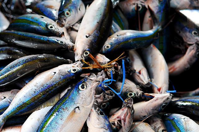 Taro Taylor, fish
