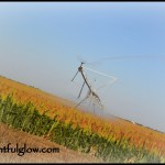 The Blessing and Beauty of Irrigation