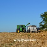 In the Field, Cutting Corn