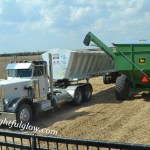 We Cut Soybeans 2014 {Part 3}