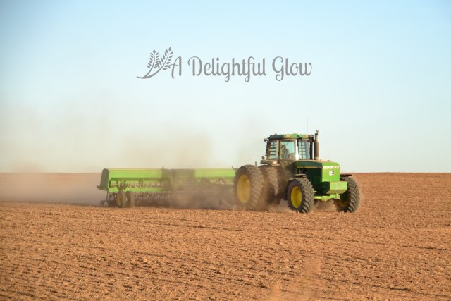 drilling-the-wheat-2016-1