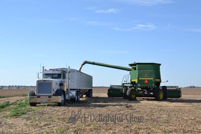 soybean-harvest-2016-10