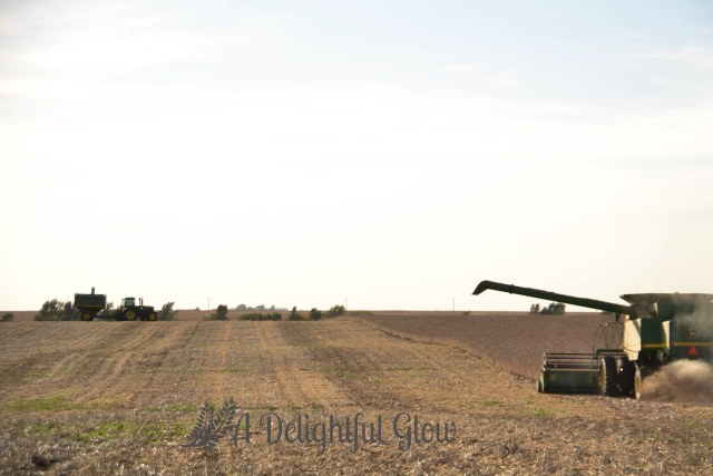 soybean-harvest-2016-14